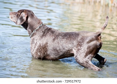 dog, water and nature