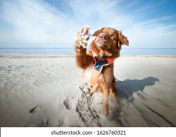 Dog waving and saing goodbye at the seaside. High five dog tricks. Blue skye