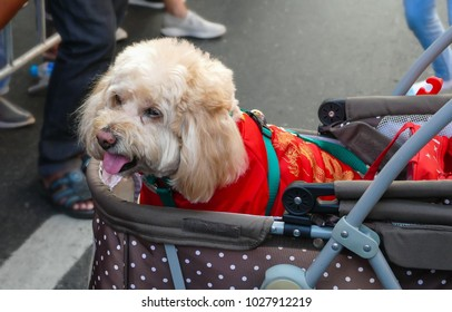 dog  wear chinese tradithional clothes in a baby carriage
