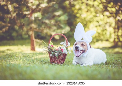 Dog wearing bunny ears headband with Easter basket filled with greenery and flowers