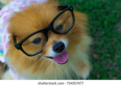 Dog wearing glasses is sitting at the park happily. It sent a smile to the beloved owner
