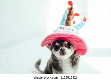 A dog wearing a hat in the shape of a birthday cake is sitting and watching here