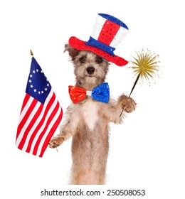 Dog wearing Independence Day hat and tie holding a bicentennial American flag and sparkler