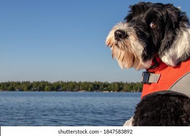dog wearing an orange life jacket at the lake