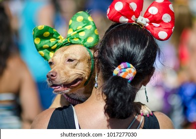 A dog wearing a polka-dot bow at a carnival party for pets in Rio de Janeiro, Brazil