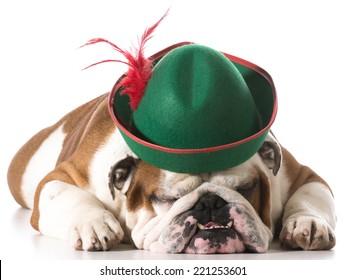 dog wearing robinhood hat on white background - english bulldog