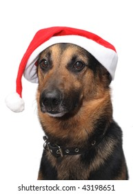 A dog wearing a Santa Claus hat