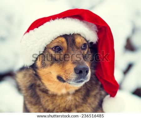 8080a5e1ed1b30 Dog Wearing Santa Hat Outdoor Winter Stock Photo (Edit Now ...