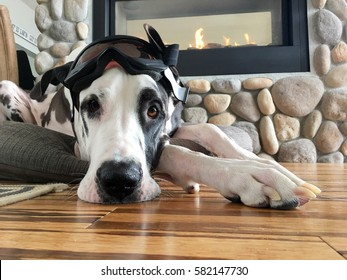 Dog wearing ski goggles on top of his head laying on hardwood floors by a fireplace