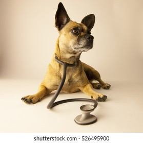 Dog wearing a stethoscope/Dog veterinarian