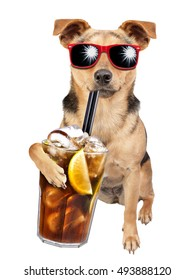 Dog wearing sunglasses and drinking cuba libre cocktail isolated