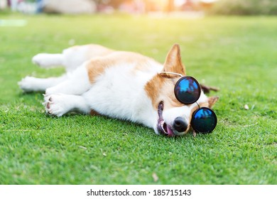 Dog wearing sunglasses on the green grass