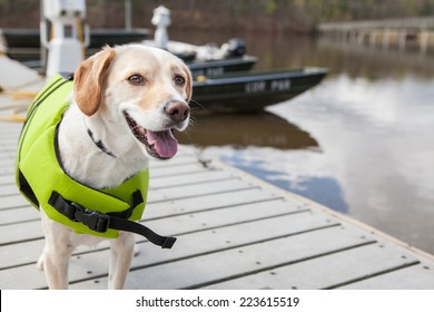 Dog wears life jacket, ready for a boat ride