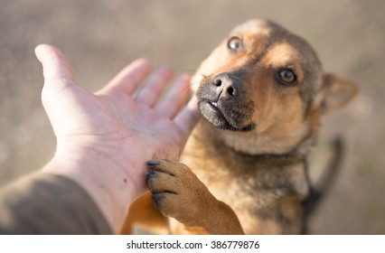 dog weasel hand on nature
