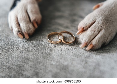 Dog with wedding rings. boston terrier on wedding day. Love dogs