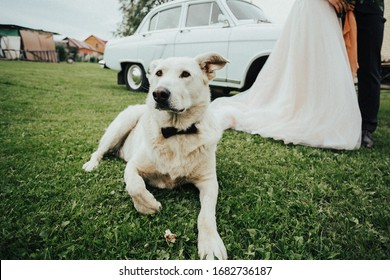 dog at a wedding with a tie