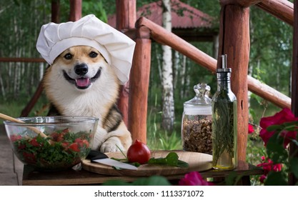 Dog Welsh Corgi Pembroke is an admirer of Italian food, prepared a salad of tomato, arugula, walnuts and olive oil.
