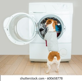 Dog in white t-short back standing near washing machine putting clothes. Empty space for your brand logo image or text.