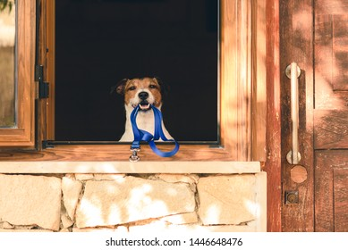 Dog in window of cottage holding leash in mouth willing to go for walk
