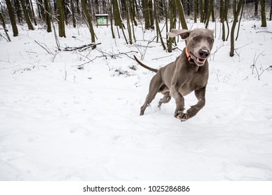 dog and winter