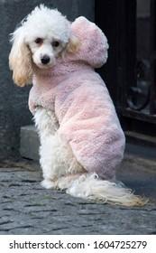 A dog in a winter coat