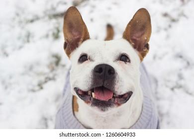 Dog winter joy portrait