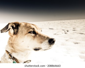 dog in winter landscape with snow
