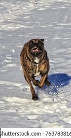 Dog Winter Outdoors Snow Lake