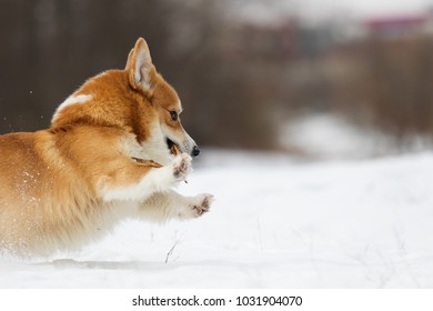 dog in the winter park