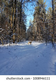 Dog in winter time