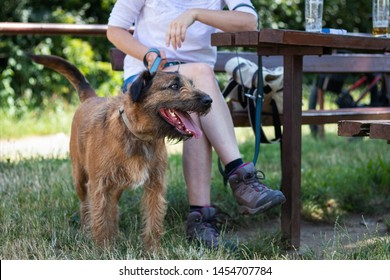 Dog and woman resting in outdoor restaurant. Refreshment during hiking with dog.