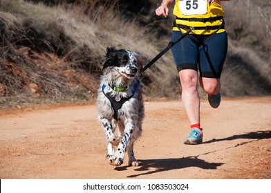 Dog and woman taking part in a popular canicross race