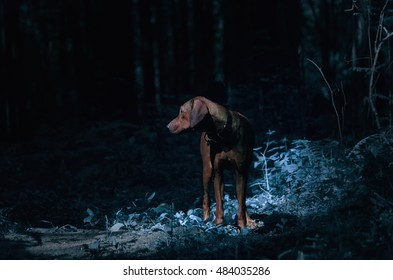 dog in the wood in the light of the moon at night