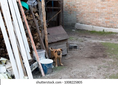 the dog in the yard in the village. the dog near the barn