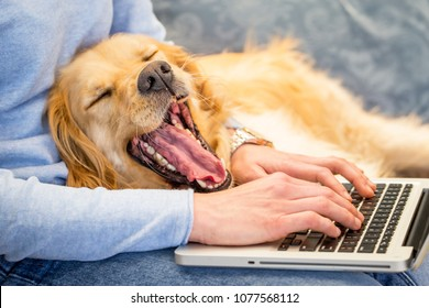 Dog yawning while its owner working on laptop