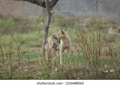 Dog/Bitch walking in forest of SoonValley,punjab,Pakistan...Dated 12-Dec-2018