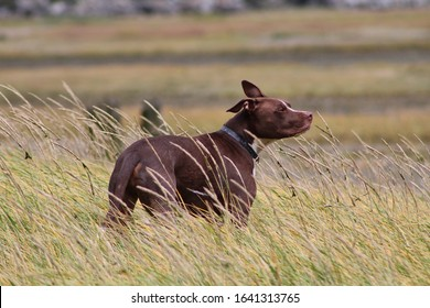 doggo sniffing in the wind