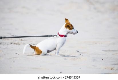 Doggy on leash on a beach