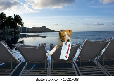 Doggy on vacation in Hawaii.