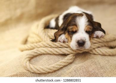 Doggy sleeps on rope