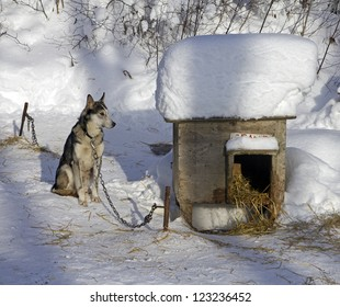 doghouse with dog in a dog pawn