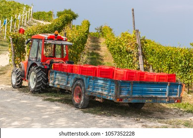 Dogliani, Piedmont, Italy - September 17, 2011: Tractor bringing baskets for the grape harvest to the vineyard in Langhe, the largest wine region in Piedmont (Unesco World Heritage Site).