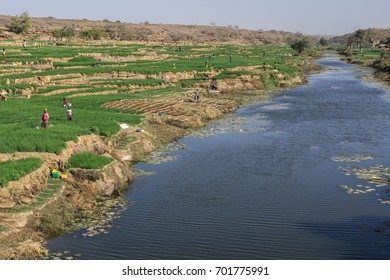 Dogon agriculture, Pays Dogon, Mali