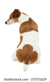 Dog's back, ass, buttocks. Back view. White background. Cool spot unusual coloring