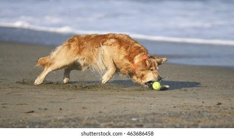 Dog's at Baker Beach, San Francisco, CA.