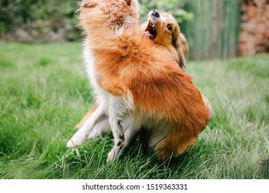 Dogs bite each other during the game