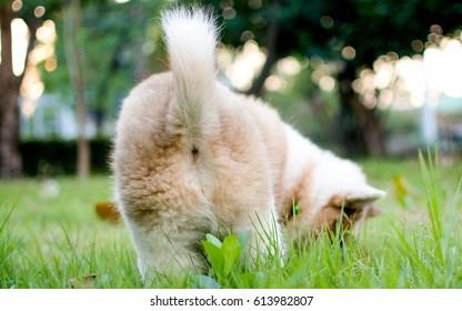 Dog's butt.