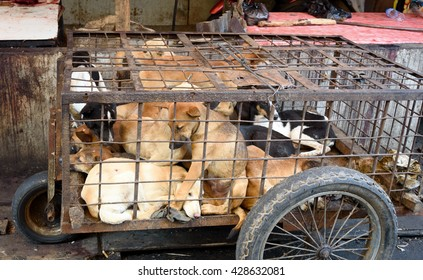 Dogs in cage awaiting slaughter on Tomohon Traditional Market. North Sulawesi. Indonesia