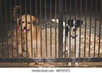 dogs in cages.dog behind the fence