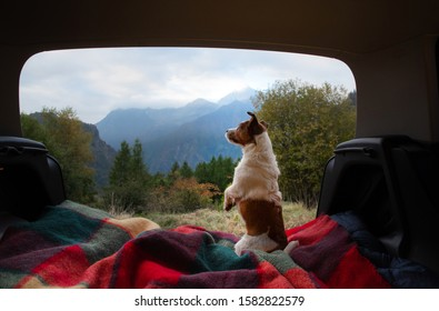 dogs camping in the car. Nova Scotia Duck Tolling Retriever and Jack Russell Terrier in the luggage compartment. Pets on vacation.